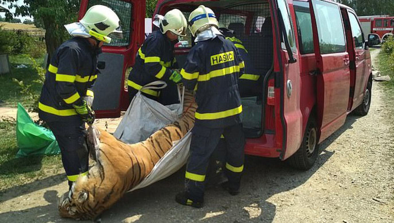 Tygrysy były przetrzymywane w betonowych boksach (fot. Administracja celna Republiki Czeskiej)