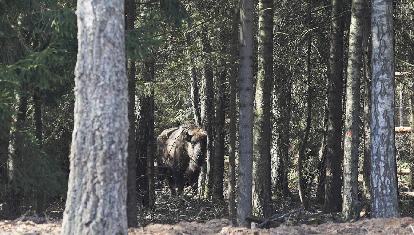 Lasy Państwowe tłumaczą, jak przygotować się do wypoczynku (fot. arch.PAP/Artur Reszko)