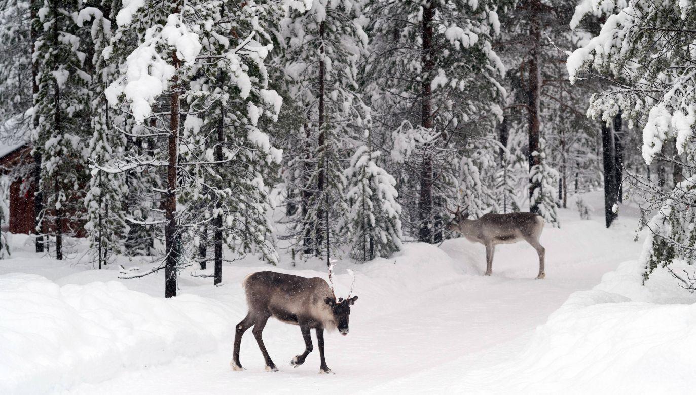 Takiej anomalii w regionie Laponii jeszcze nie było – twierdzą synoptycy (fot. arch. PAP/DPA/Peter Endig)