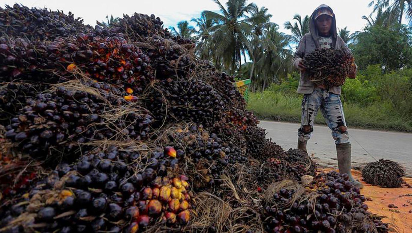 (fot. REUTERS/Antara Foto/Nova Wahyudi)