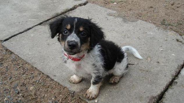 Z raportu NIK wynika, że zwierzęta są trzymane w strasznych warunkach (fot/flickr.com)