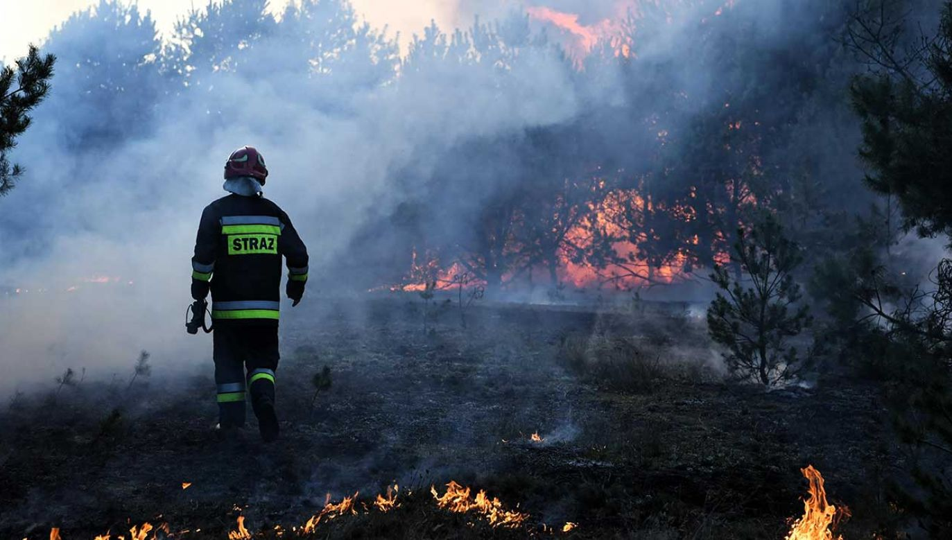 Instytut Badawczy Leśnictwa apeluje o zachowanie wzmożonej ostrożności w lasach (fot. arch. PAP/Tytus Żmijewski)