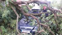 Złamane kolejne drzewo przygniotło kolejne auto (fot. Łukasz Opara)