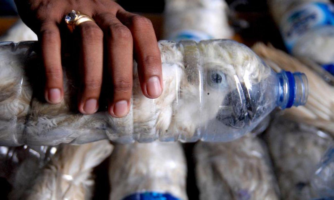 (fot. REUTERS/Antara Foto/Risyal Hidayat)