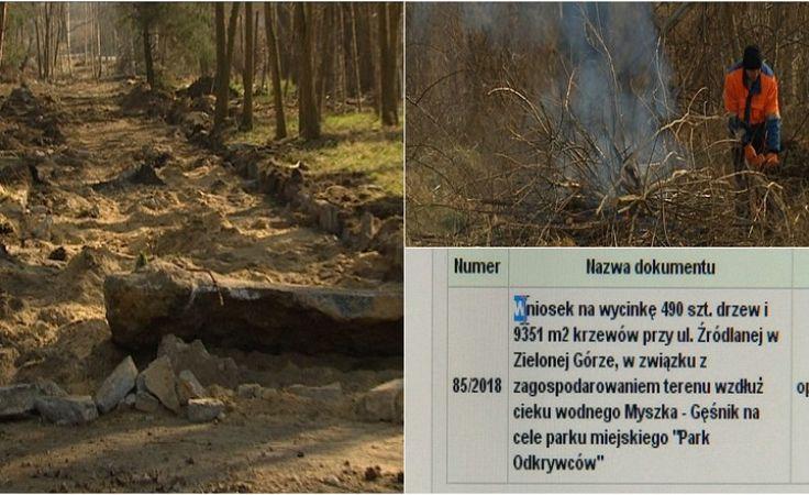 Zniknie prawie pół tysiąca drzew? Magistrat szykuje wycinkę