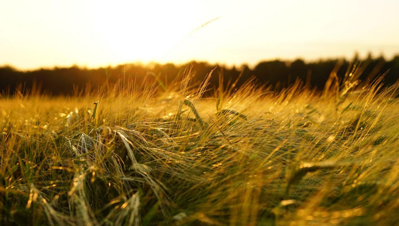 Komisja zaopiniowała budżet rolny na 2019 r. bez poprawek (fot. pixabay/Hans)