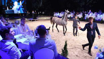 Aukcja w Janowie Podlaskim w tym roku odbyła się oddzielnie od pokazu koni (fot. PAP/Wojciech Pacewicz)