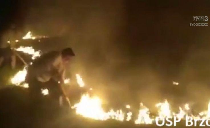 Pożar lasu w Kobylarni