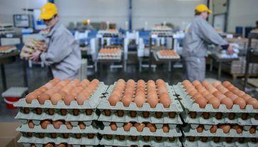 Chodzi o inwestycje planowane przez jedno z największych przedsiębiorstw jajczarskich w Europie, ukraińską firmę Ovostar Union (fot. arch. PAP/Wojciech Pacewicz)