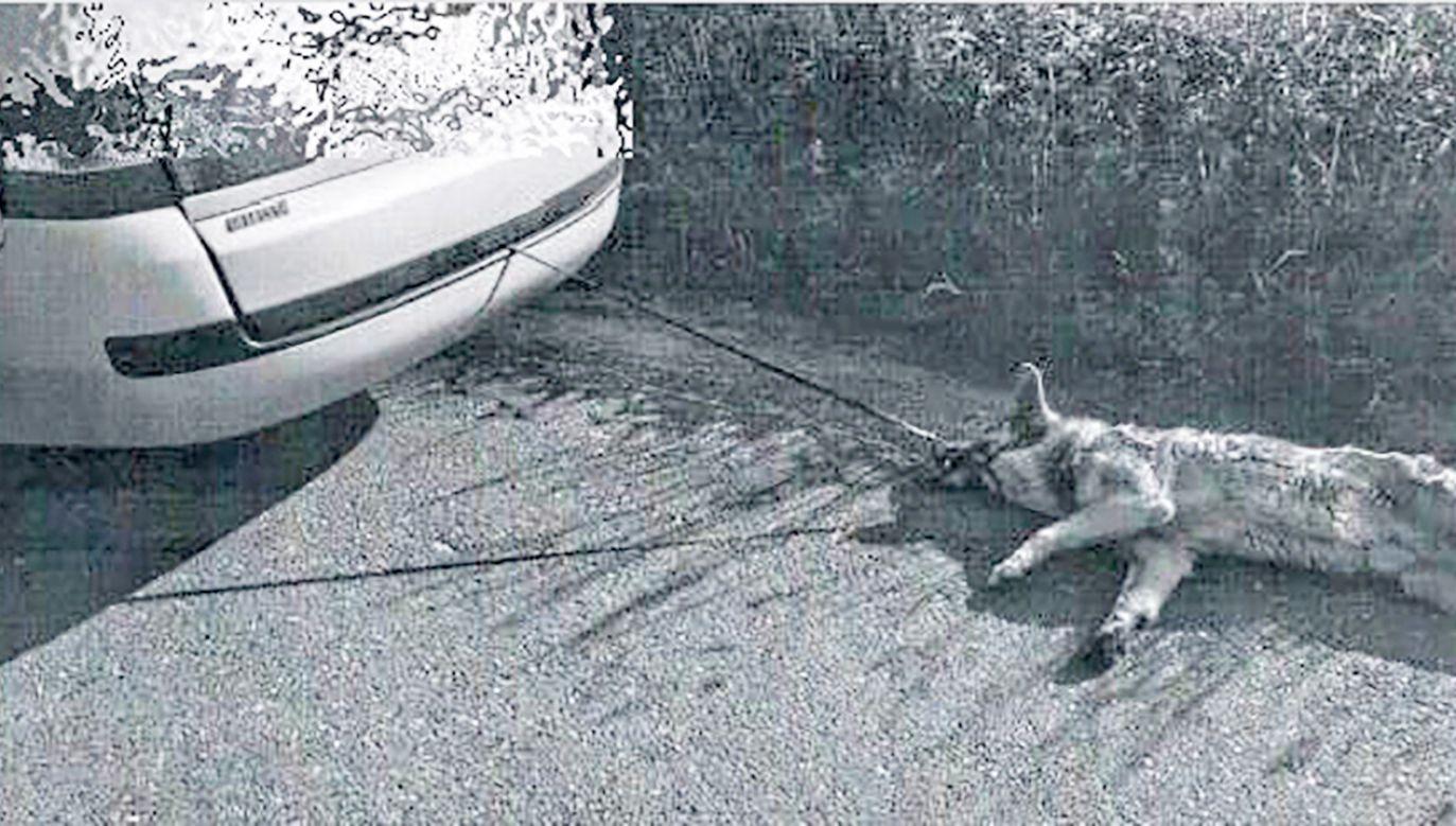 Mężczyzna argumentował, że nie chciał zabrudzić samochodu (fot. slaska.policja.gov.pl)