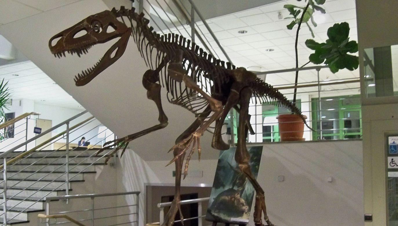 Zrekonstruowany szkielet w budynku Uniwersytetu Warszawskiego (fot. en.wikipedia.org)