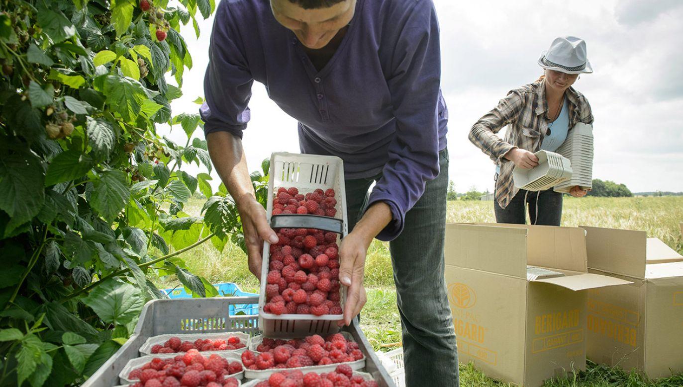 Aż 2 na 3 pracowników z Ukrainy na utrzymanie w Polsce przeznacza nie więcej niż 500 zł miesięcznie (fot. arch.PAP/Wojciech Pacewicz)