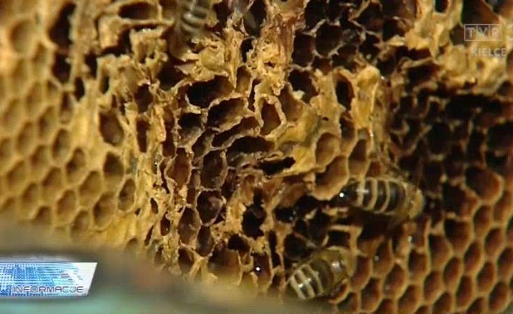 Pasieki do kontroli. Wiosenne badanie pszczół