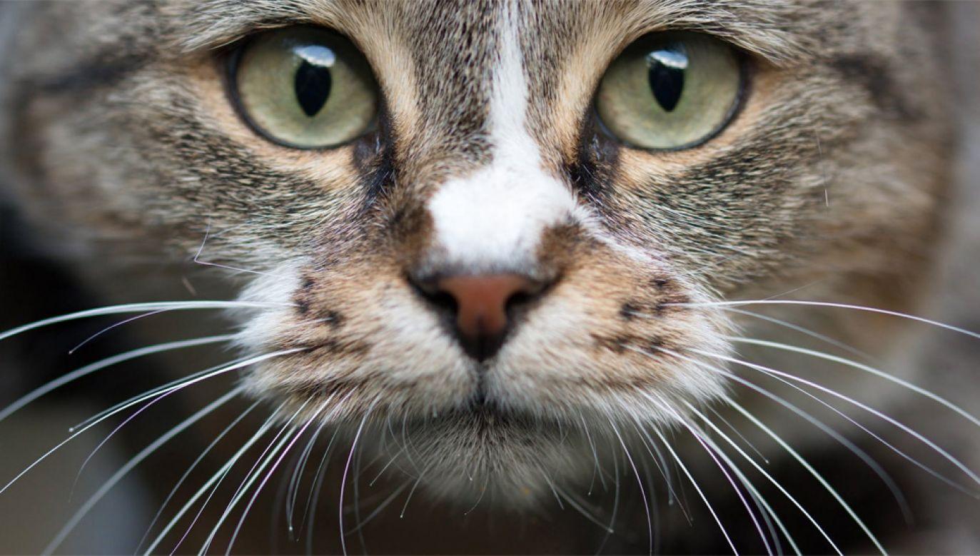 "Francuska minister ds. europejskich nazwała swojego kota ""Brexit"" (fot. Pexels)"