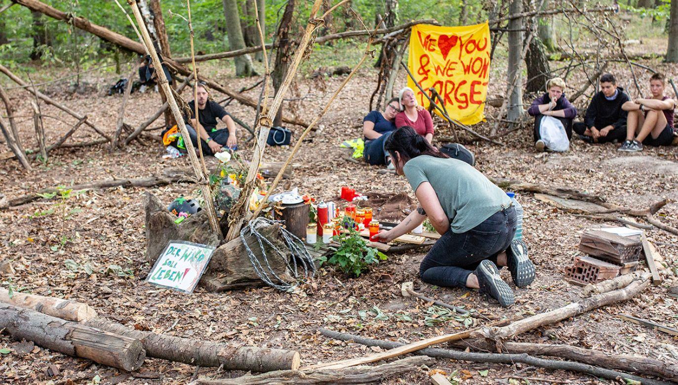 Smutek ekologów w lesie Hambach (fot. PAP/EPA/JONAS NOLDEN)
