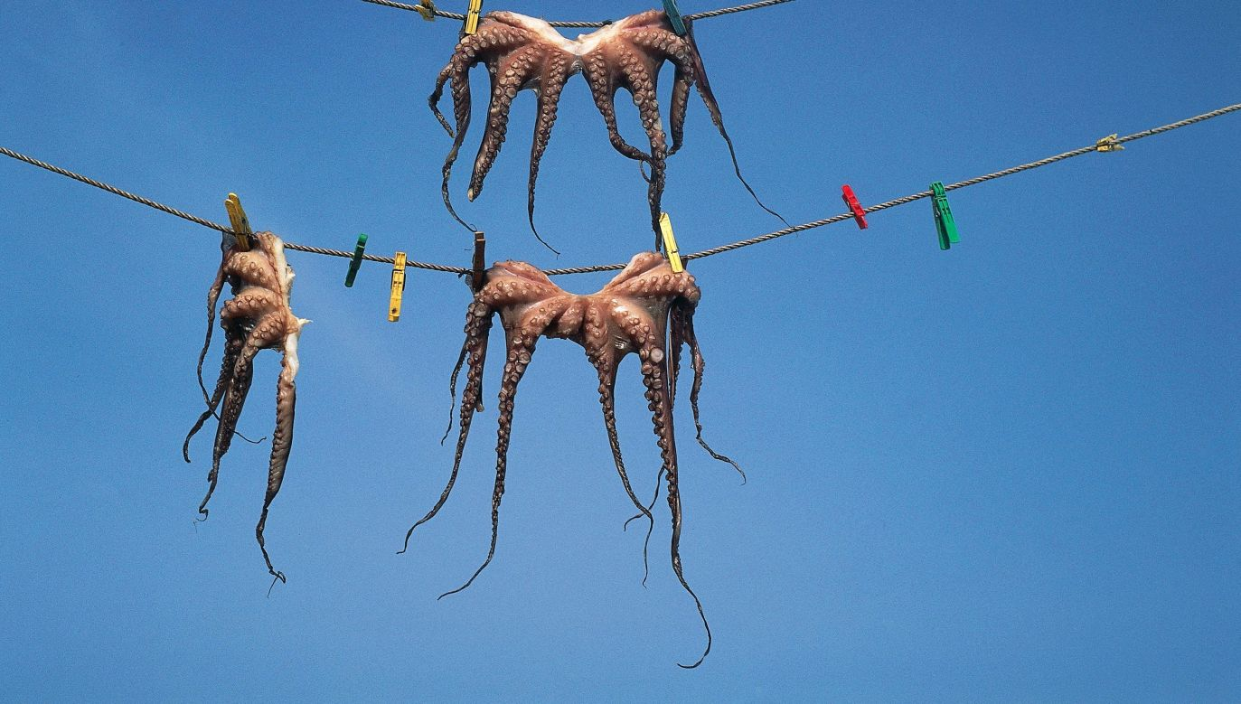 Suszenie osmiornic w Sigri na greckiej wyspie Lesbos. Czy konsumując owoce morza zjadamy naszych kosmicznych braci? Fot. Getty Images/DEA/G. COZZI/Collection: De Agostini