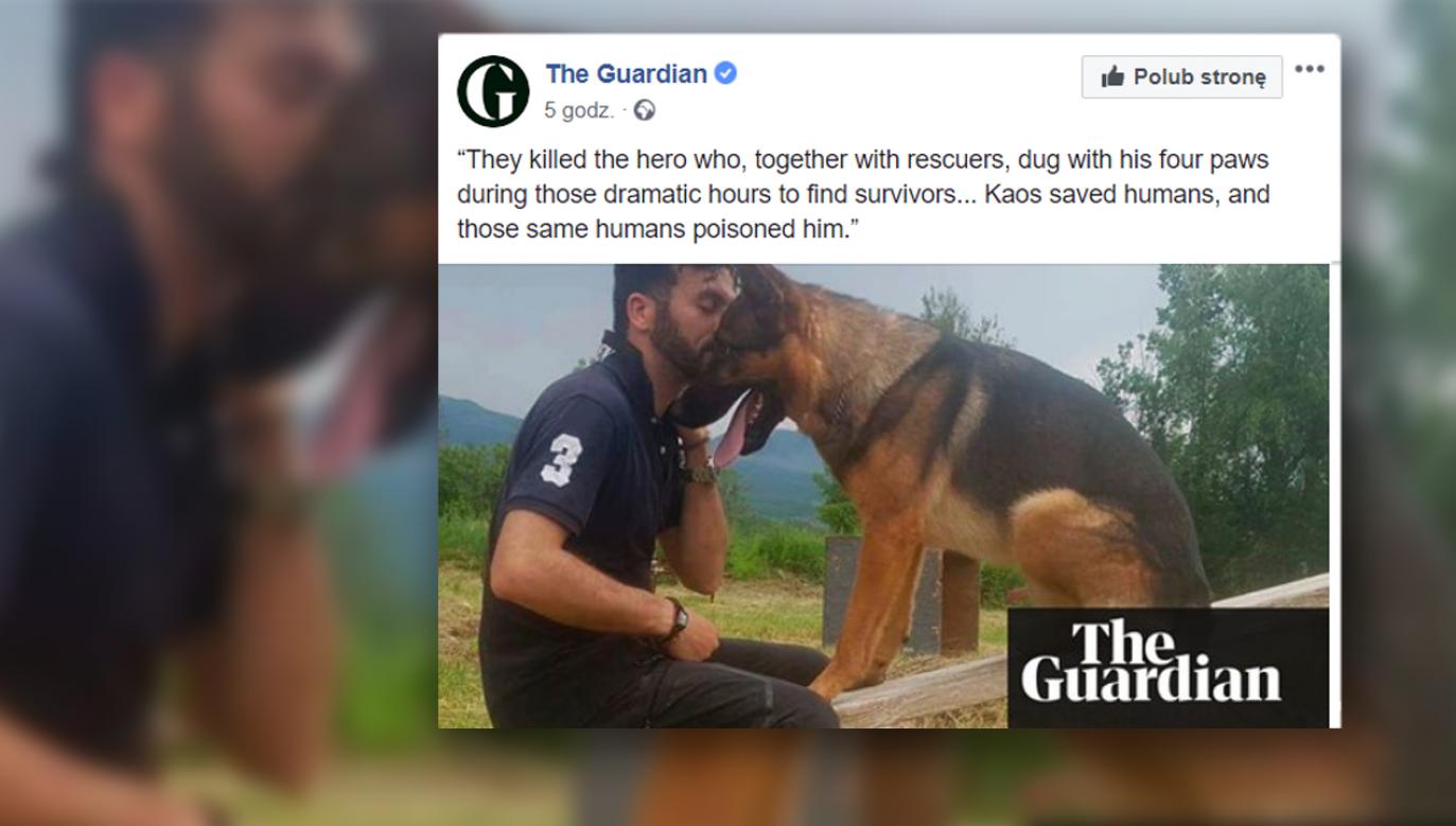"""Odwaga i oddanie, jakimi wykazał się w akcji ratunkowej, zyskały Kaosowi przydomek """"psiego bohatera"""" (fot. fb/The Guardian)"""