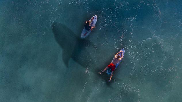 Drony będą ostrzegać kąpiących się przed nadpływającymi rekinami  (fot. pixabay.com/NeuPaddy)
