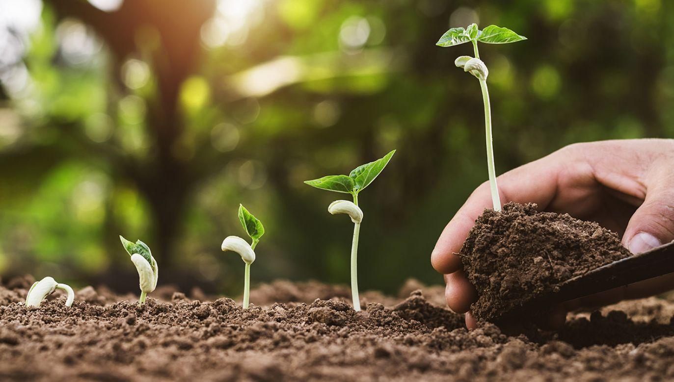 UE przedłużyła licencję na glifosat do 2022 r. Ale wokół herbicydu pojawia się coraz więcej kontrowersji (fot. Shutterstock/lovelyday12)