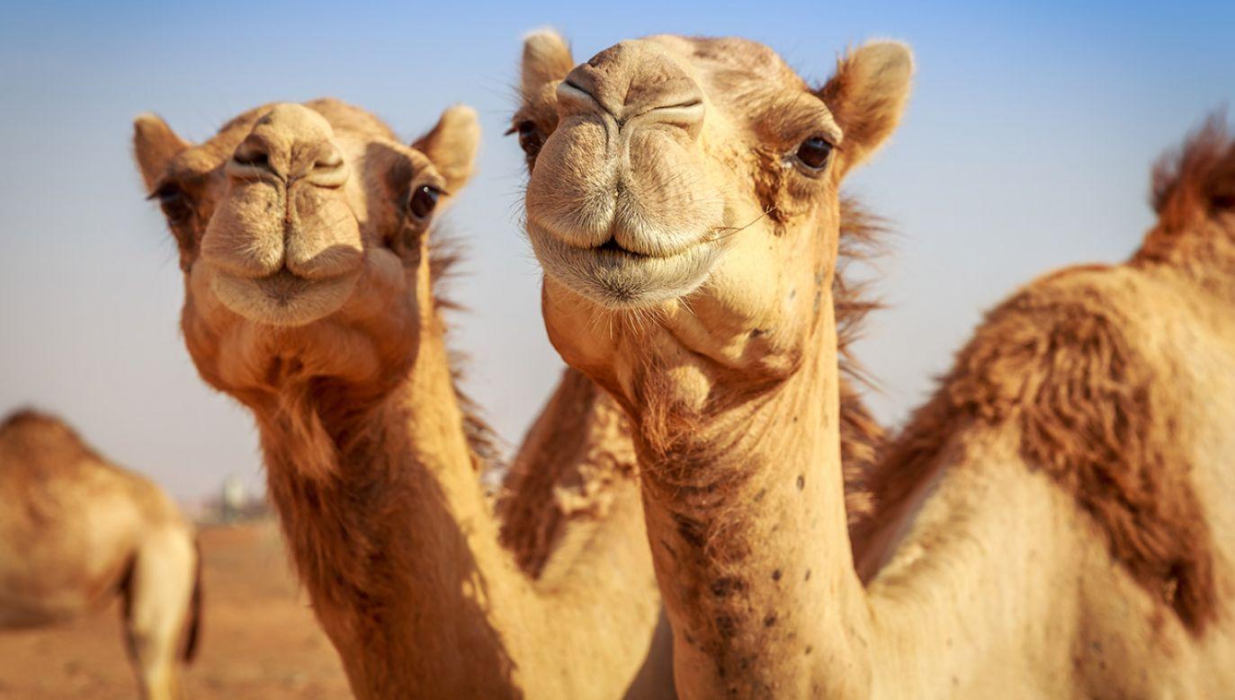 Zwierzęta zabito przy dźwiękach bębnów szamańskich (fot. Shutterstock/Yasser El Dershaby)