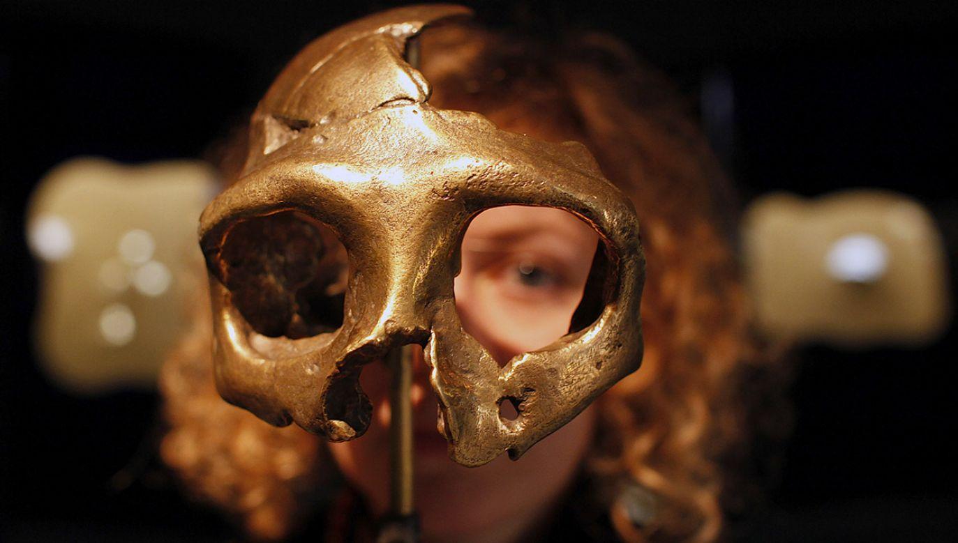 Neandertalczycy zostawili naszym przodkom niemałe dziedzictwo genetyczne (fot. REUTERS/Nikola Solic)