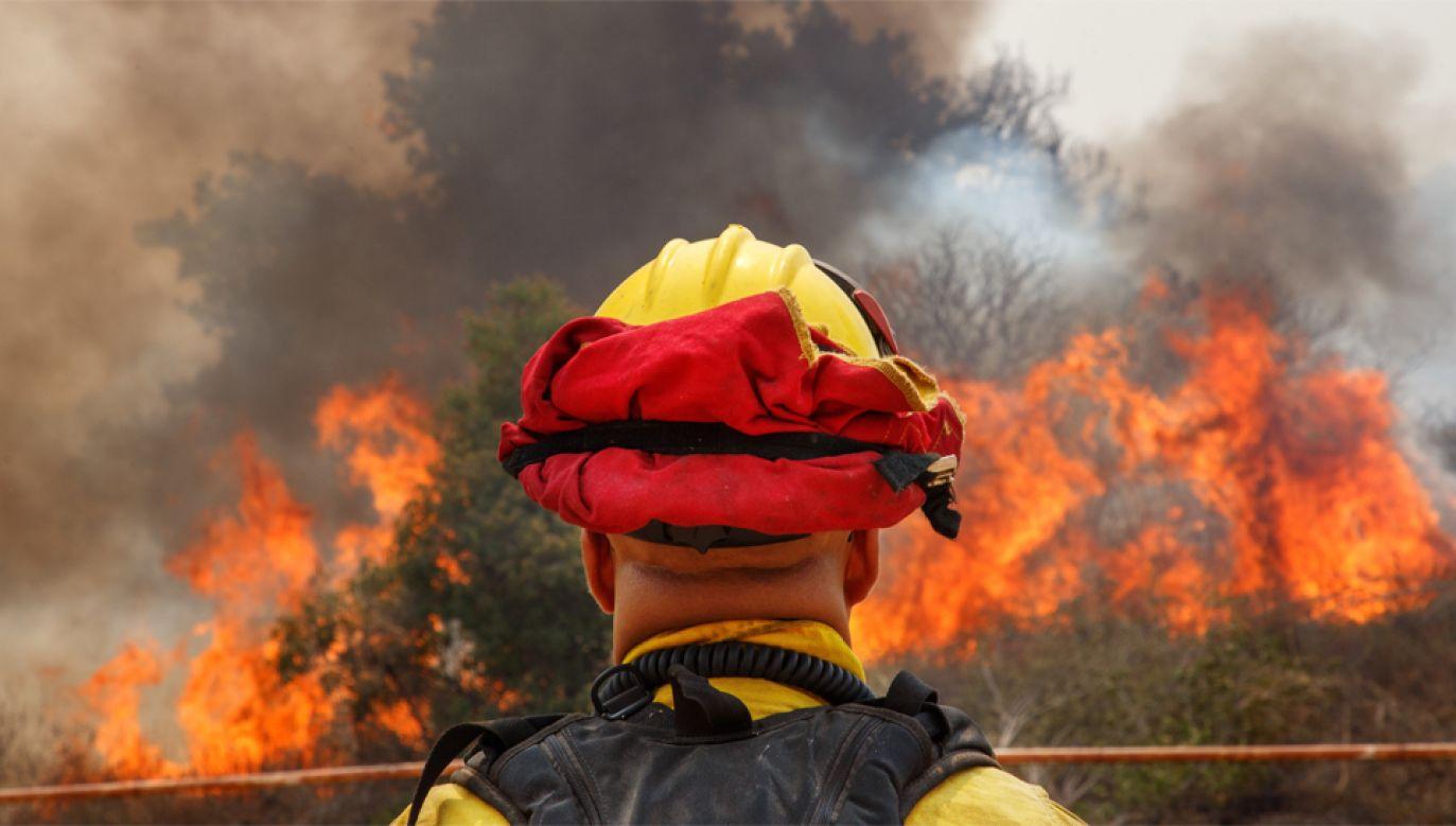 Ogień strawił już w tym roku powierzchnię 377 tys. ha (fot. EPA/EUGENE GARCIA)
