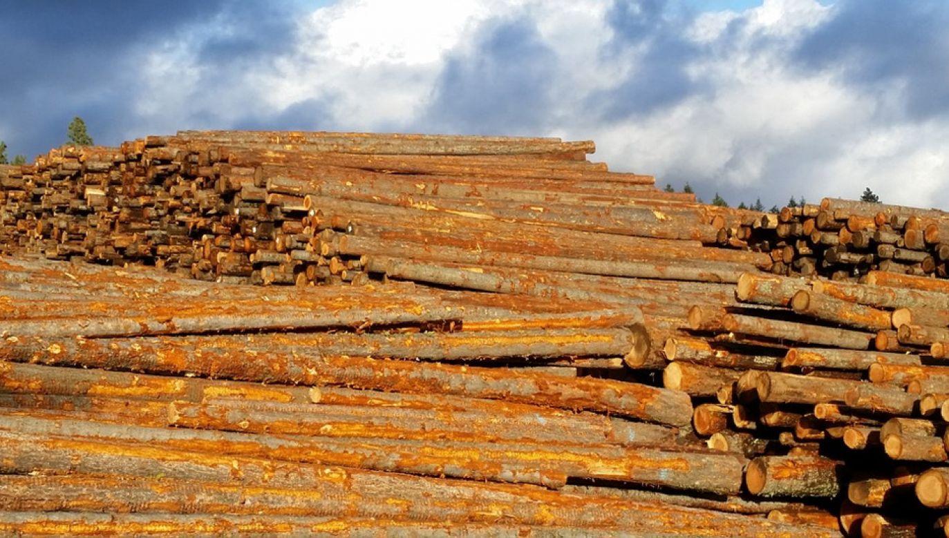 """Lasy Państwowe obniżyły ceny wobec wyższej podaży drewna po """"huraganie stulecia"""" (fot. Pixabay)"""