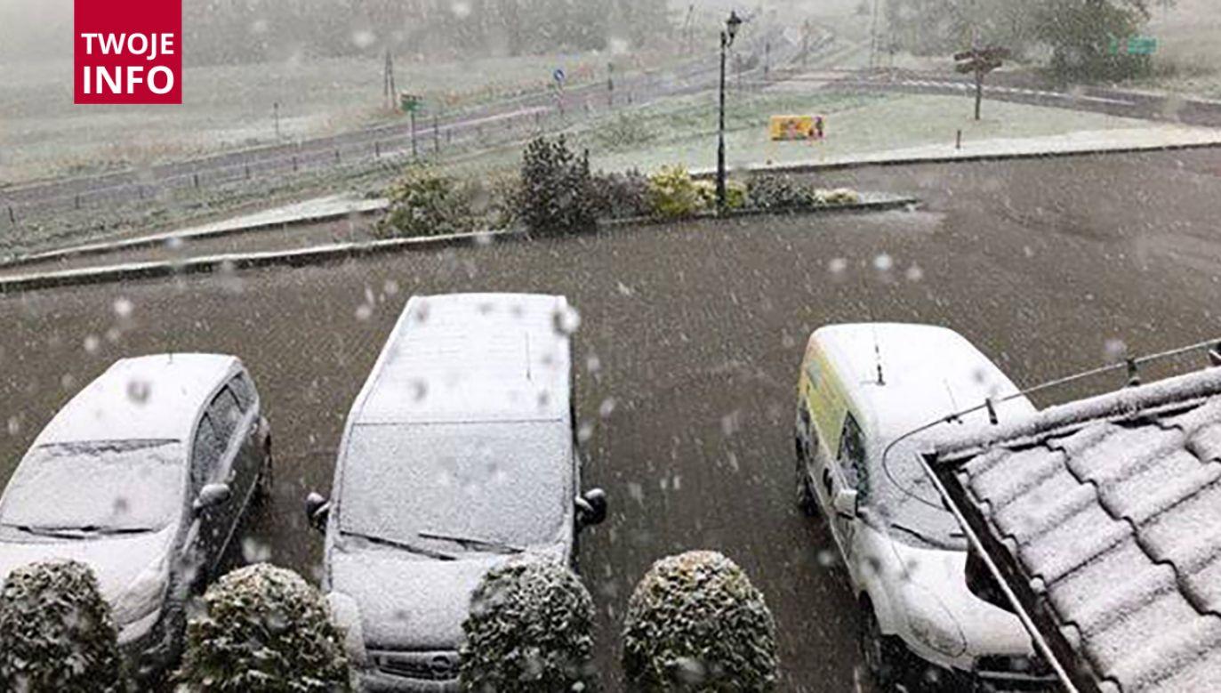 Zimowy maj – to według przysłowia – dobra prognoza dla rolników (fot. Twoje info)