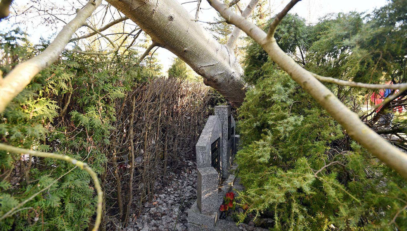 Powalone drzewa i zniszczone groby na Cmentarzu Centralnym w Szczecinie to skutki wichury jaka przeszła nad regionem 5 marca (fot. PAP/Marcin Bielecki)