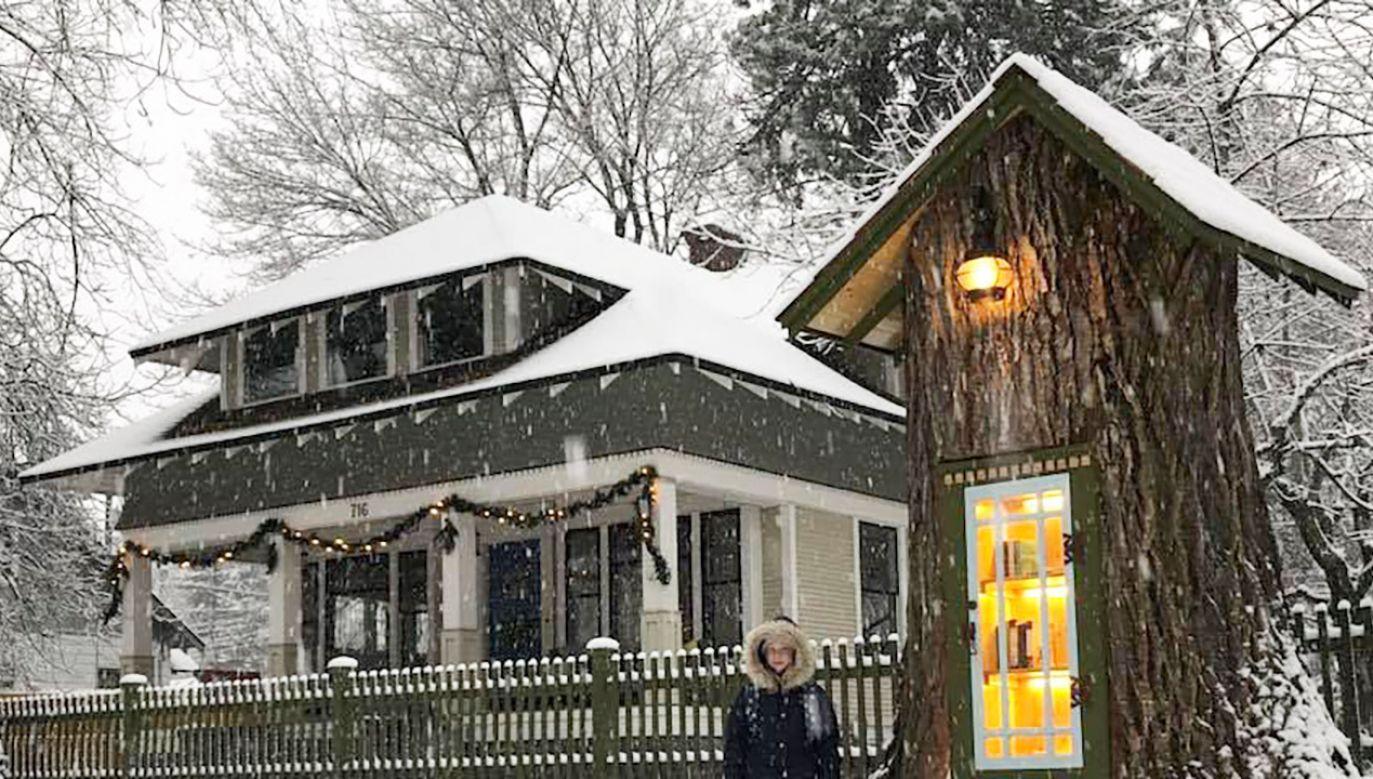 W Idaho, jednym z północno-zachodnich stanów Ameryki, powstała niezwykła biblioteka, którą zlokalizowano w starym pniu ponadstuletniego drzewa (fot. FB/Sharalee Armitage Howard)