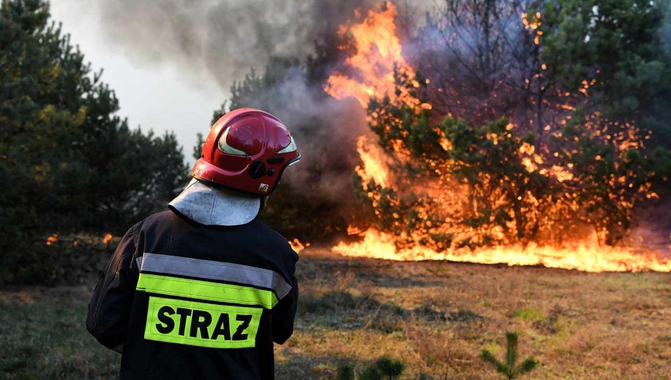 Do skutków wichury strażacy wyjeżdżali w środę 497 razy (fot.  arch. PAP/Tytus Żmijewski)