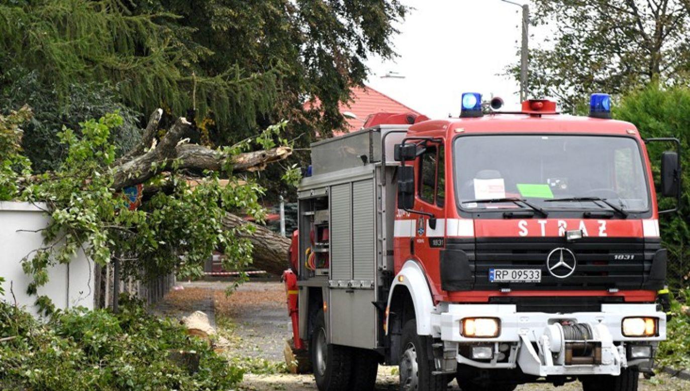 Strażacy usuwają drzewo, które złamało się podczas wichury jaka przeszła nad Przemyślem (fot. PAP/Darek Delmanowicz)