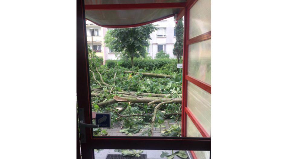 Połamane drzewa i konary zablokowały wjście z klatki schodowej bloku (fot. Karolina Sadecka)