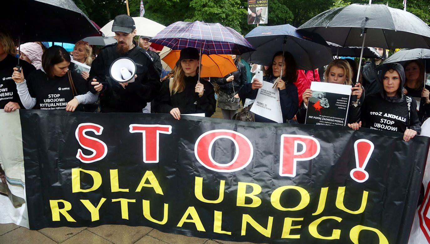 Protest obrońców praw zwierząt przeciwko ubojowi rytualnemu W 2014R. (fot. arch.PAP/Tomasz Gzell)