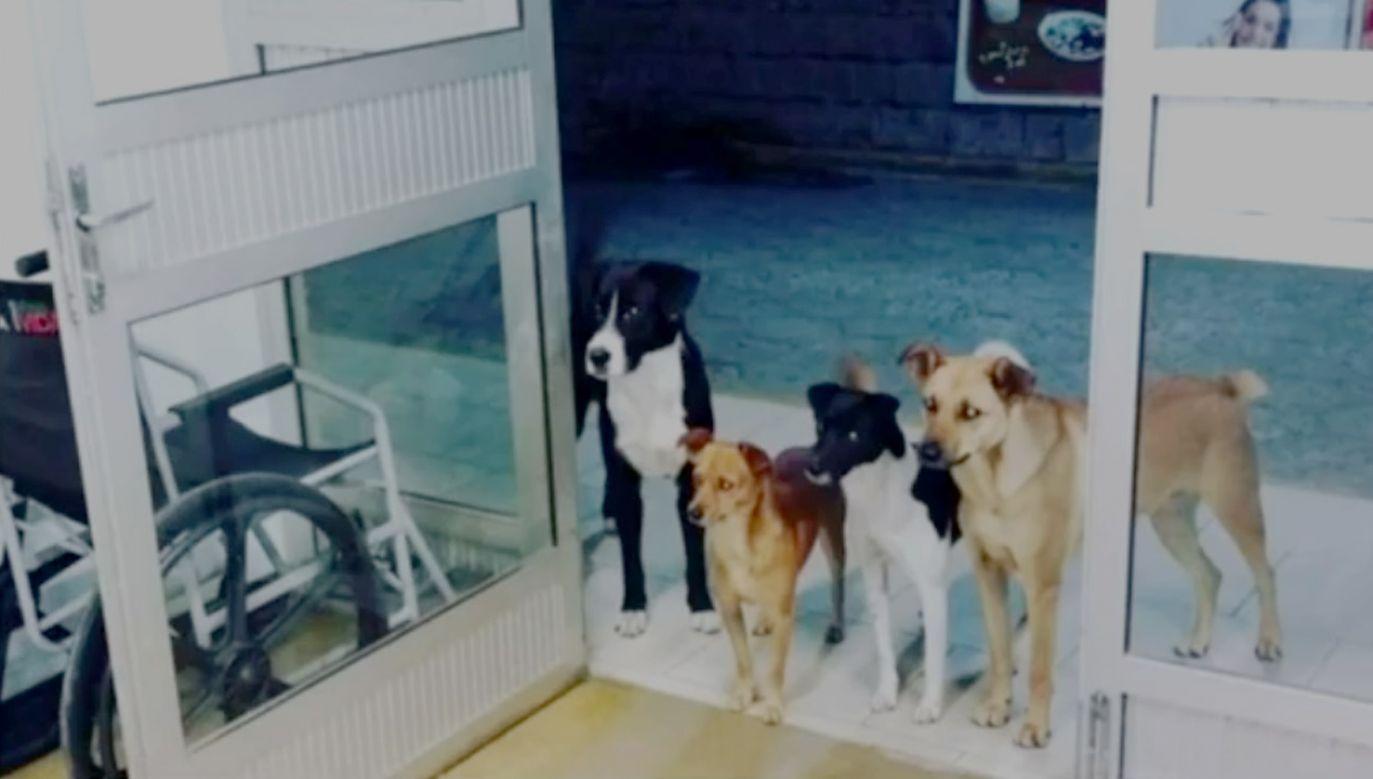 Zdjęcie psów opublikowała recepcjonistka na Facebooku (fot. yt/Repórter Record Investigação)