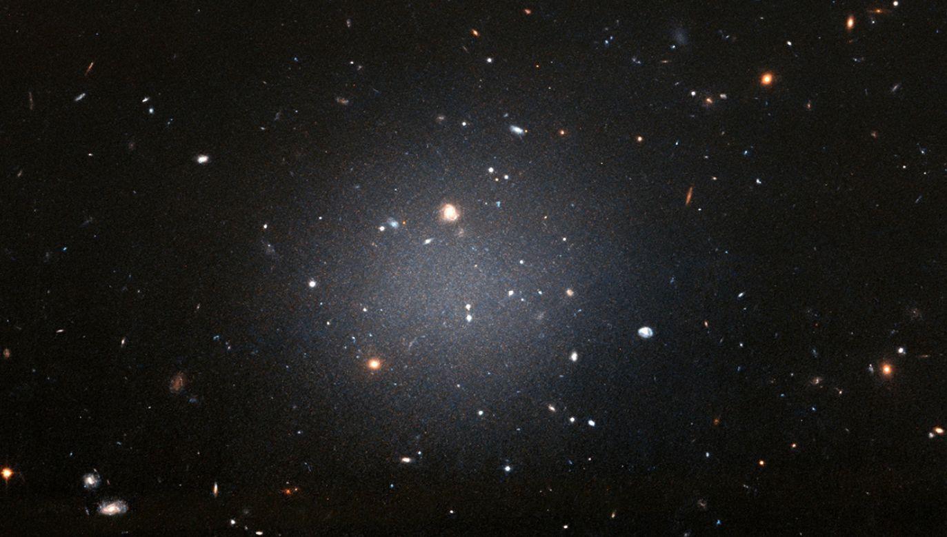 Światło, które emituje gwiazda, zostało wzmocnione o około 2000 razy (fot. PAP/EPA/NASA, ESA, and P. van Dokkum (Yale University) / HANDOUT)