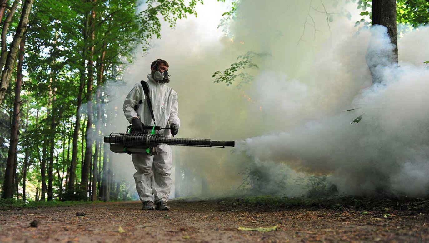 Mnożeniu się komarów sprzyjają podtopienia sprzed miesiąca (fot. arch.  PAP/Marcin Bielecki)