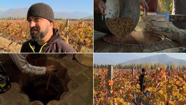 Polak produkuje wino według tradycyjnego przepisu (fot. TVP info)