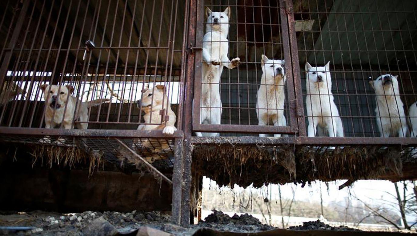 Psia farma w Korei Południowej (fot.  REUTERS/Kim Hong-Ji)