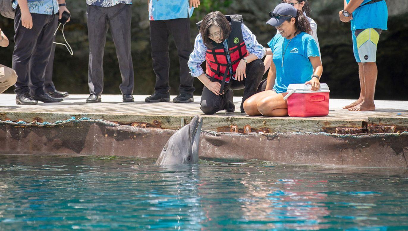 Zmiany klimatyczne mogą szkodzić delfinom  dużo bardziej, niż zakładano (fot. PAP/ EPA/TAIWAN PRESIDENTIAL OFFICE)