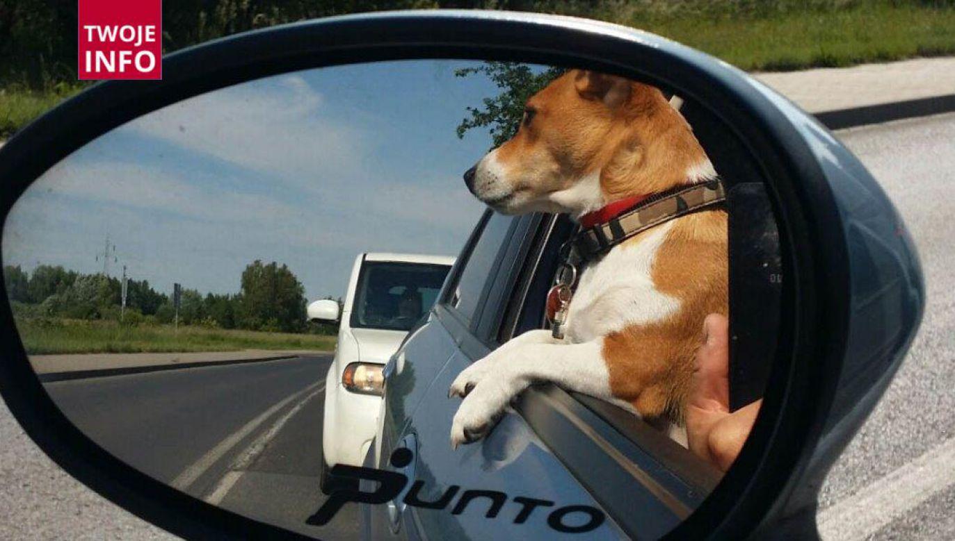 Zdjęcie psa jednego z naszych widzów (fot. Twoje Info)