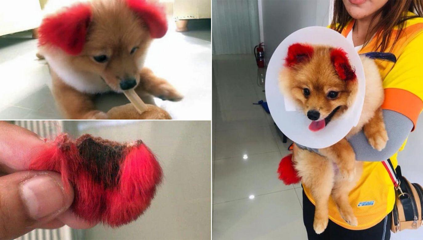 Diffy straciła kawałek ucha w wyniku reakcji alergicznej (fot. FB)
