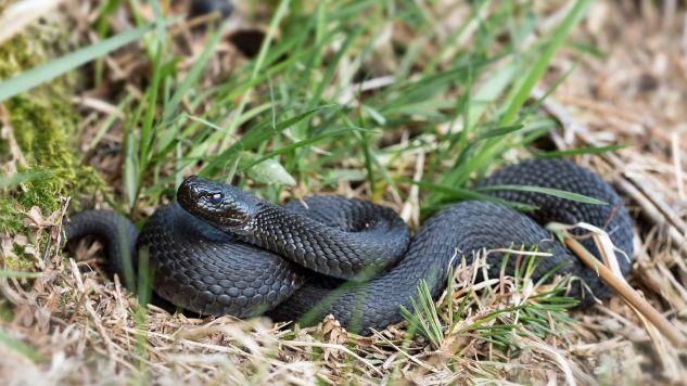 """""""Spokojnie, nie każdy wąż, na którego możecie się natknąć, jest pytonem"""" (fot. Pixabay/winterseitler)"""