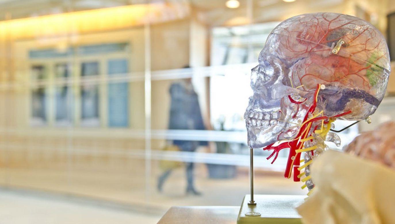 Ludzki mózg nie przestaje zaskakiwać (fot. Pexels)