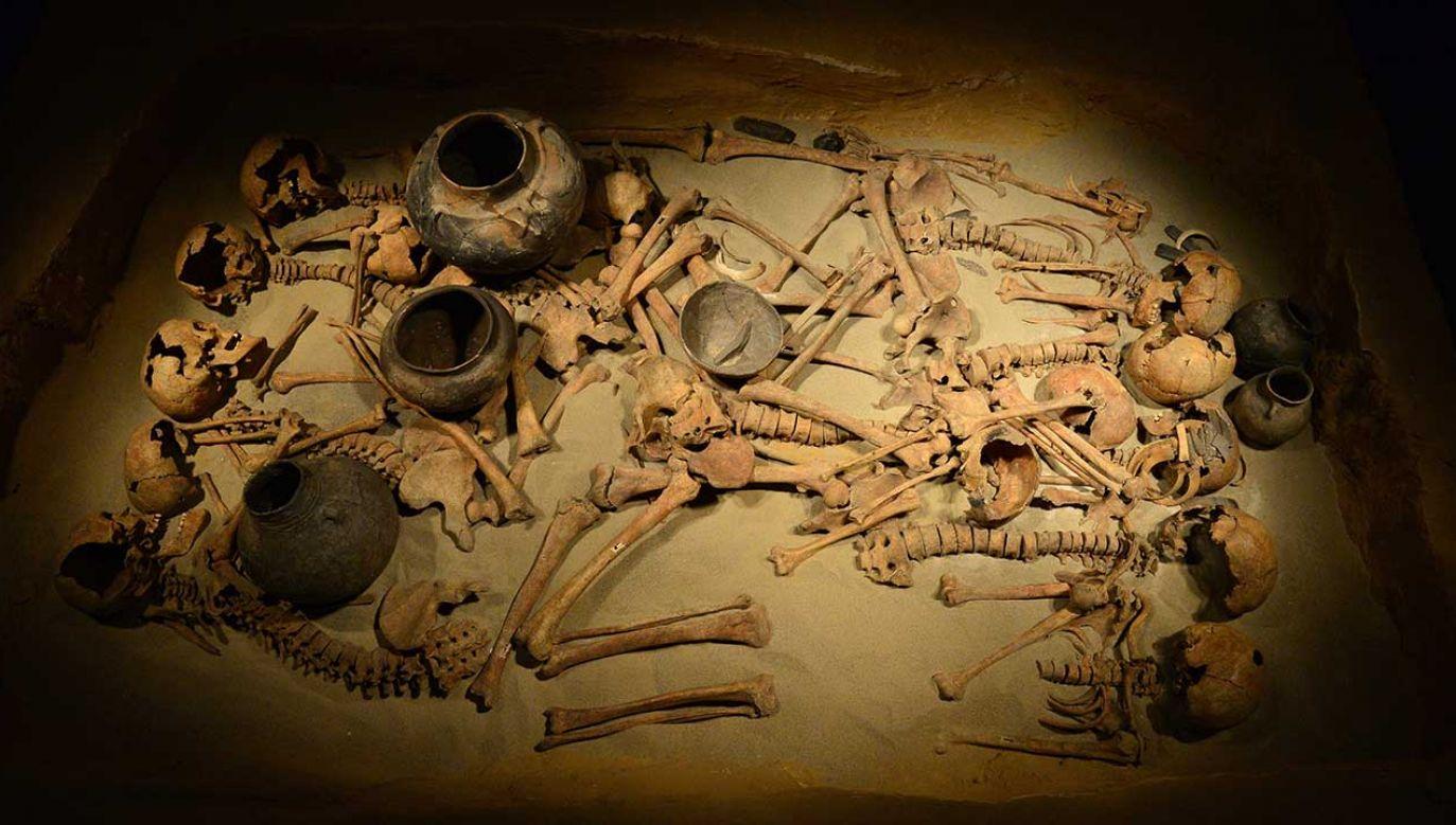 Grób zbiorowy kultury amfor kulistych został odnaleziony w 2011 r. w małopolskich Koszycach (fot. arch.  PAP/Jacek Bednarczyk)