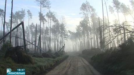 Apel o pomoc w odbudowie zniszczonych lasów