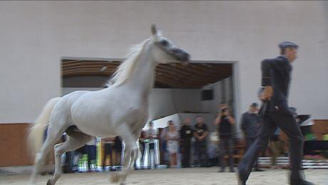 Zaprezentowano najpiękniejsze konie. Zwiedzających nie brakowało
