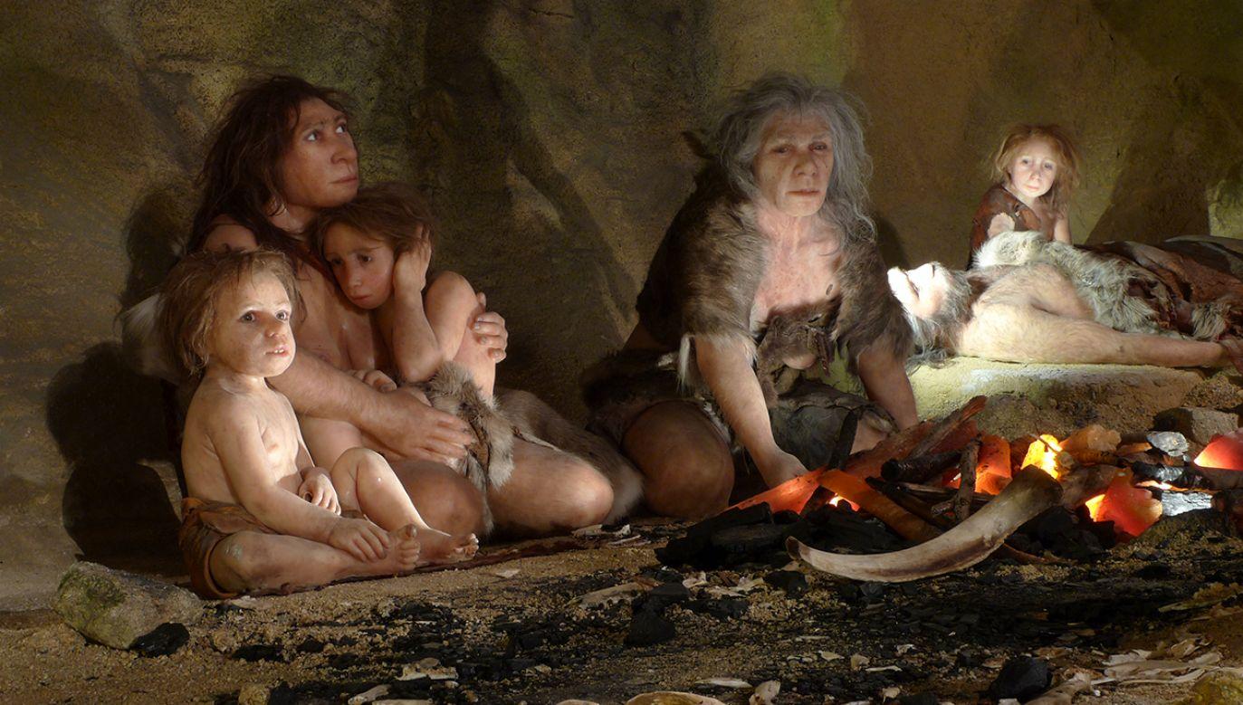 Ekspozycja w nowym Muzeum Neandertalczyka w mieście Krapina (fot.  REUTERS/Nikola Solic)