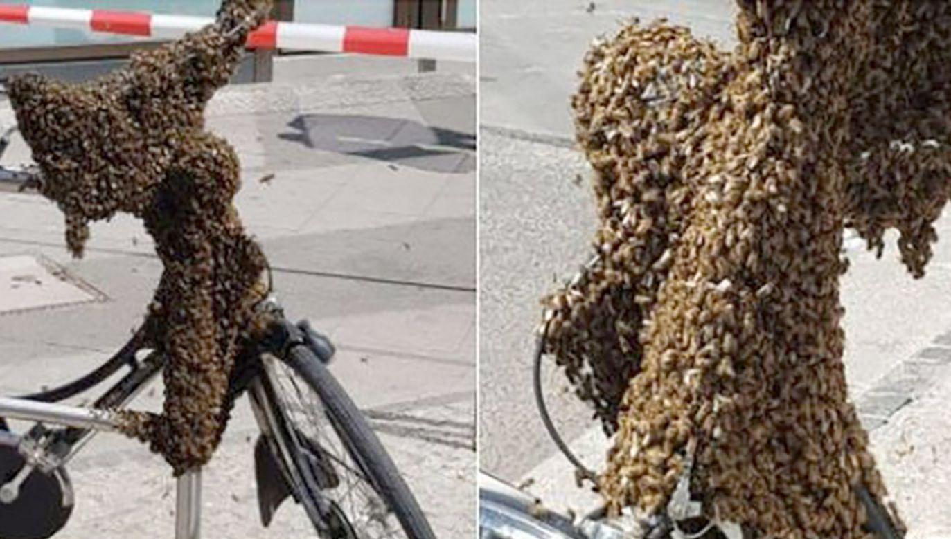 Owady zostały przetransportowane do drewnianego ula (fot. Policja Berlin)