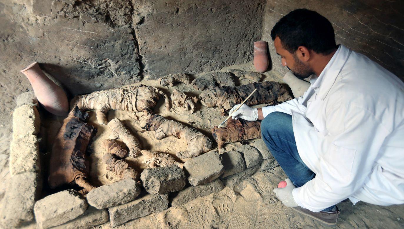 Odkrycia dokonano w pobliżu słynnych piramid w Gizie (fot. PAP/EPA/KHALED ELFIQI)